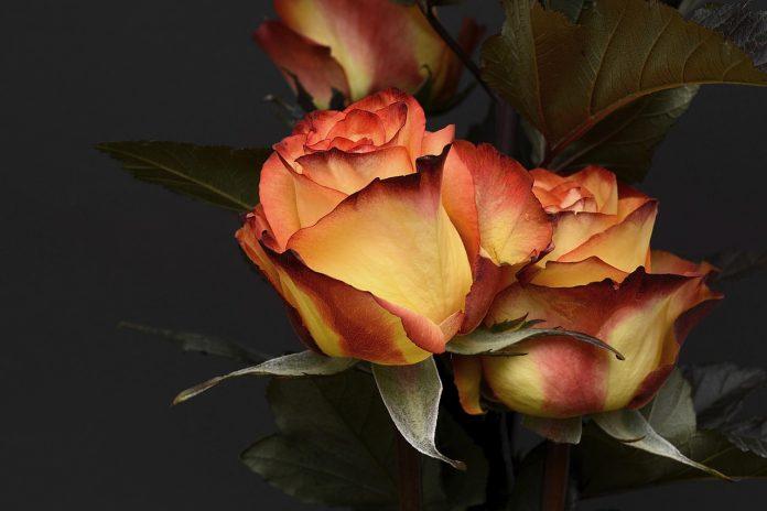 לשלוח פרחים זה טבעי