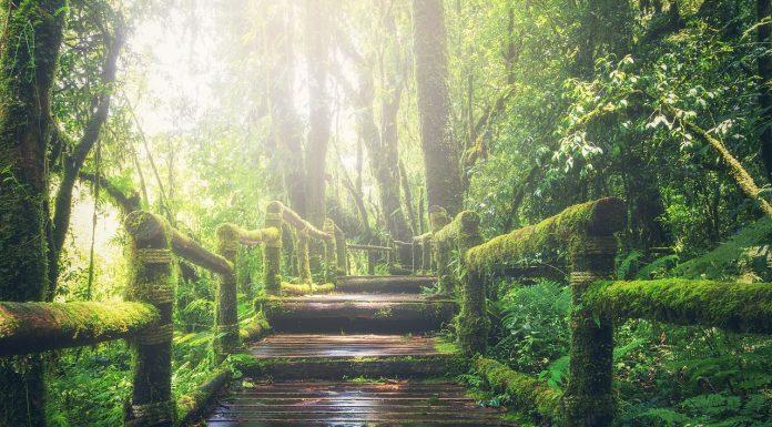 5 מוצרי חובה לפני יציאה לטרקים בג'ונגל